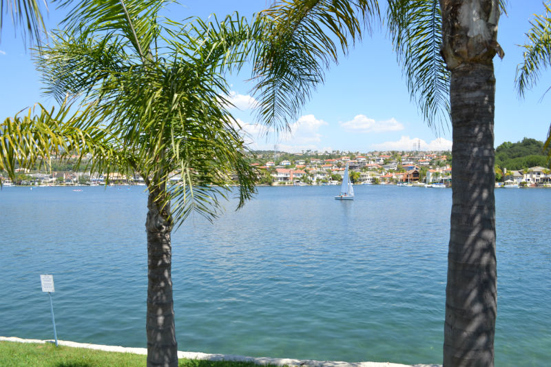 Palms on the Lake